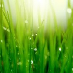 Artificial Grass Dubai LLC